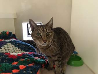 senior cats need a home together
