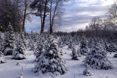 Sleighbell Christmas Tree Farm & Gift Barn