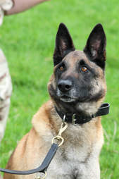 Mali the dog at Defence Animal Centre and with Cpl Dan Hatley