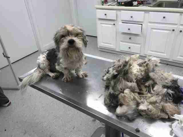 severely matted dog
