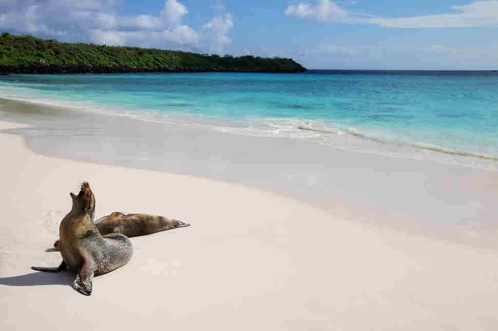 sea lion bahia gardner