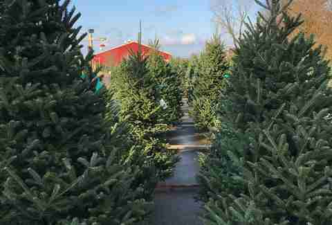 Best Christmas Tree Farms Near Chicago - Thrillist