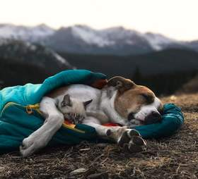 Dog and cat snuggling in sleeping bag together