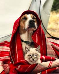 Dog and cat snuggling underneath blanket
