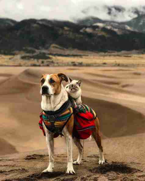 Cat on top of dog's back while hiking