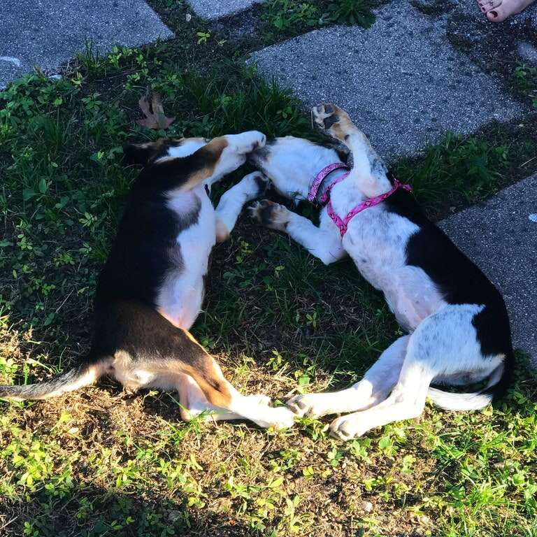 puppy sisters reunite