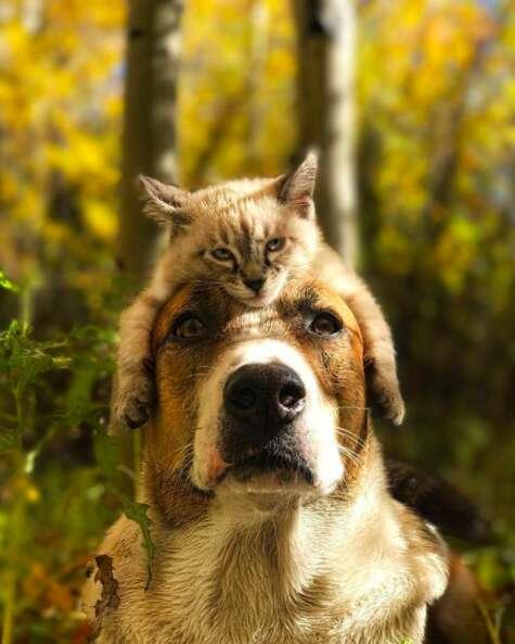 Kitten lying on top of dog's head