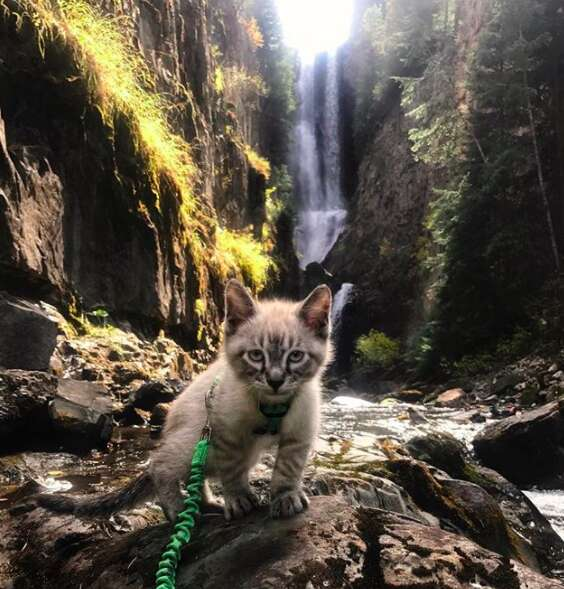Kitten on harness out for a walk