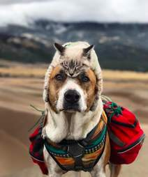 Cat lying on top of dog's head