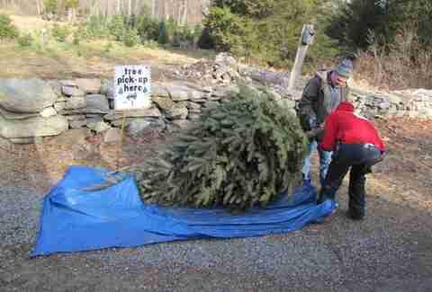 Christmas Tree Farm Near Nyc