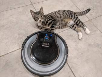 cat on roomba