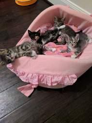 kittens in a pink basket