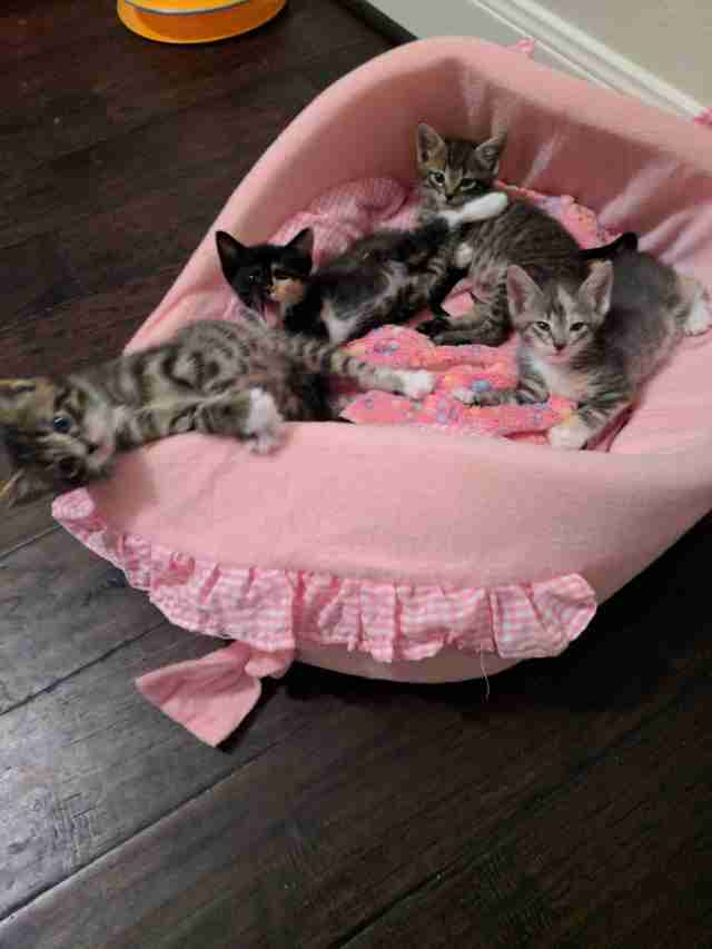 kittens in a pink basket