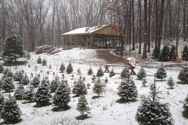 Emmerich Tree Farm- The Real Christmas Tree Experience