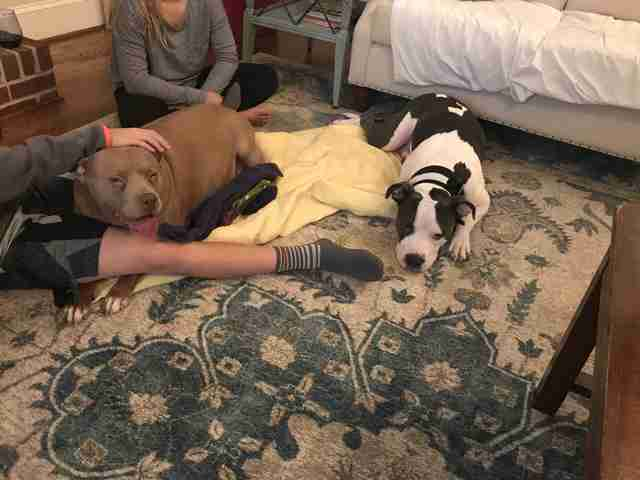 Dogs sitting together on carpet