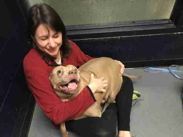 Woman hugging shelter dog inside kennel
