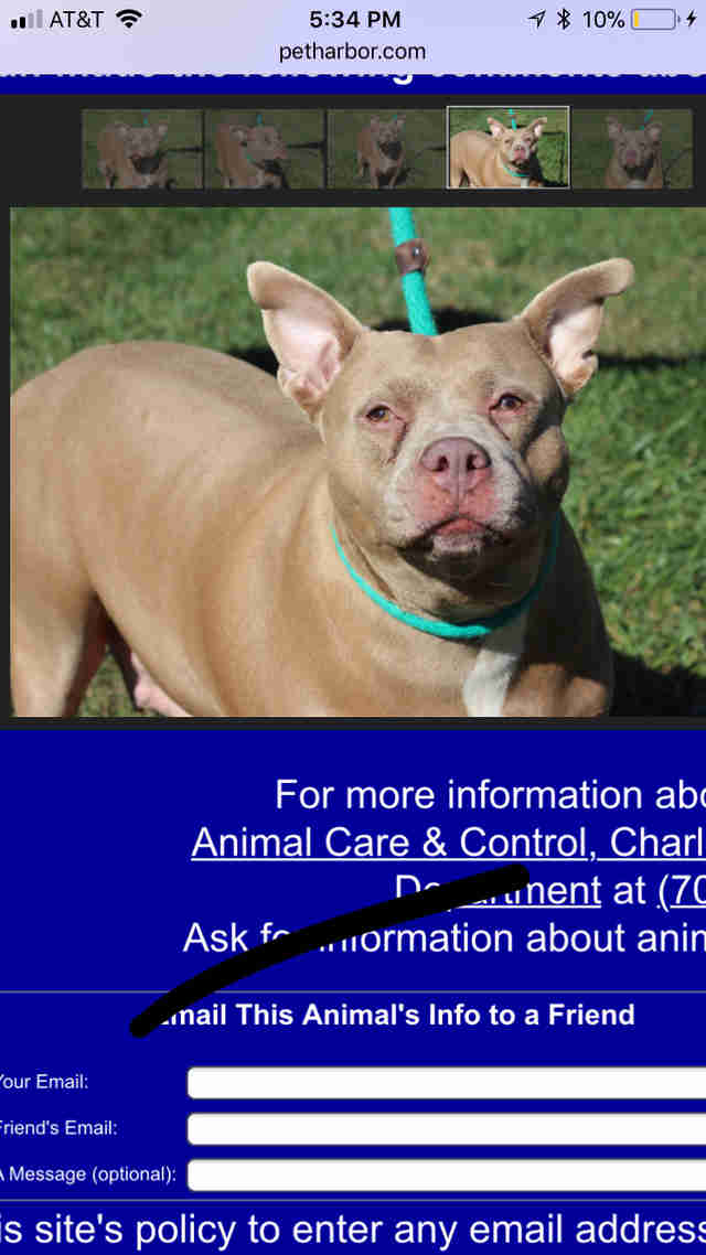 Shelter dog's profile on pound's website