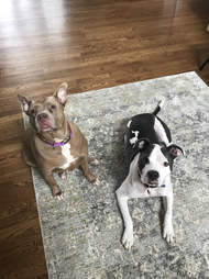 Two dogs sitting next to each other on the carpet
