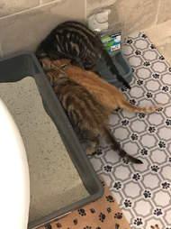 kittens found in chicken coop