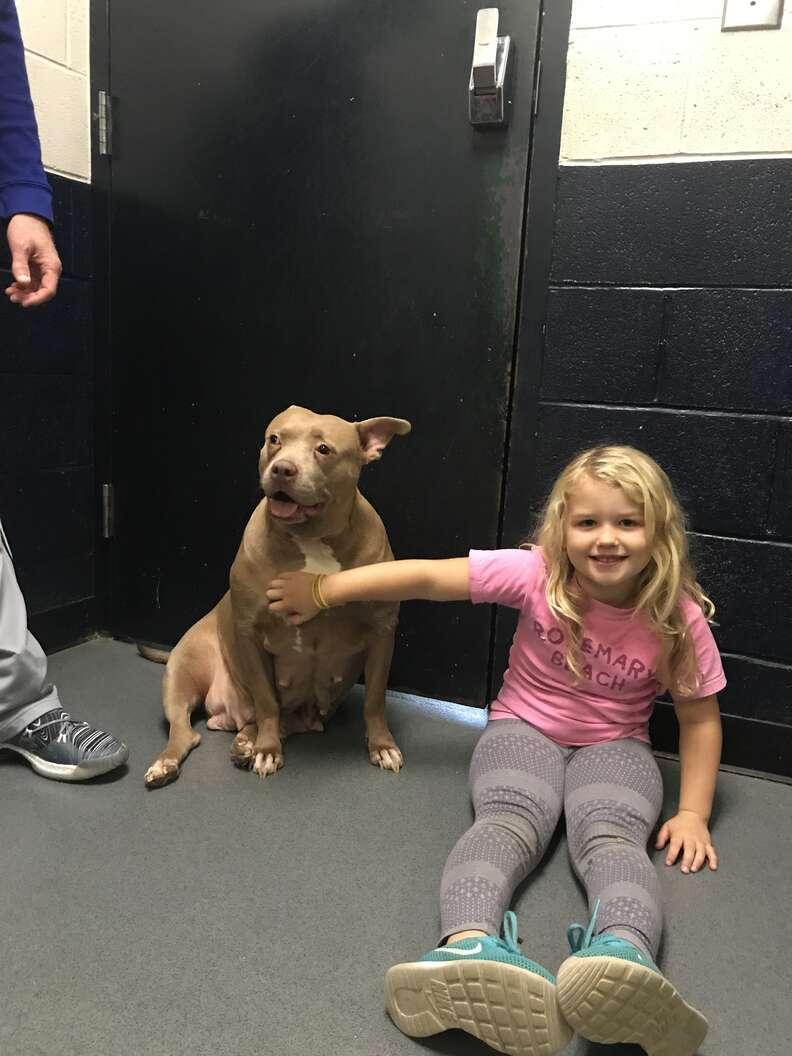 Little girl petting shelter dog