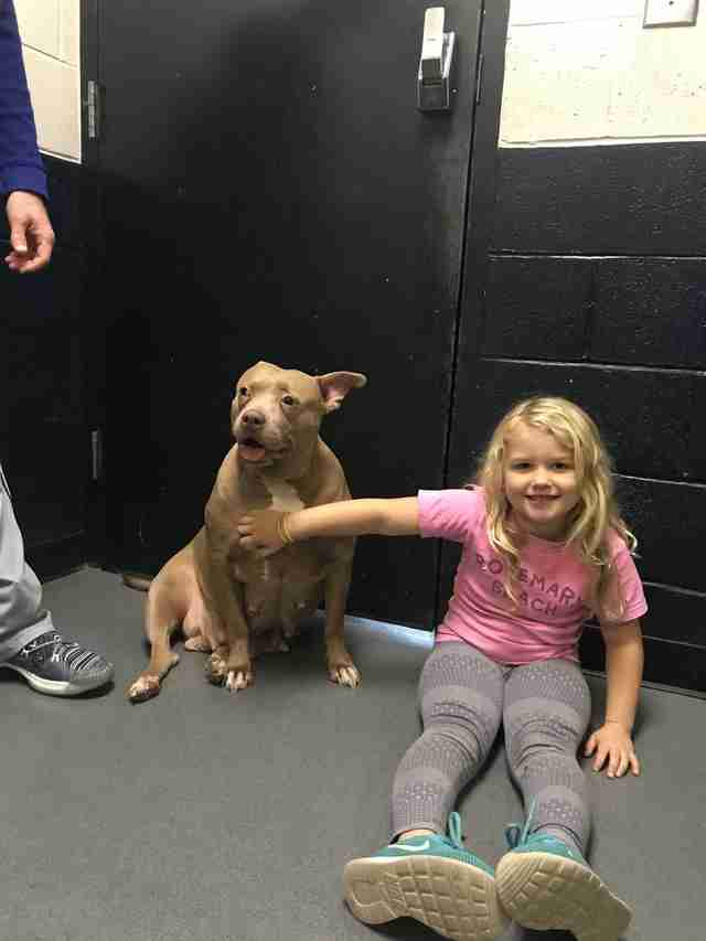 Little girl petting shelter dog