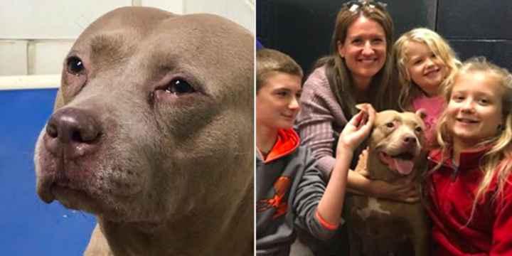 Sad Dog Filmed 'Crying' At Charlotte Shelter Loves Her New Life