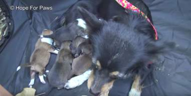 dog mom and her puppies