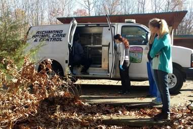 Bobcat in Richmond Animal Control Van