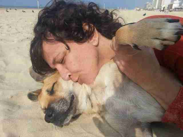 paralyzed dog rescue israel