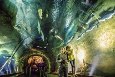 Wonders of Wildlife Museum & Aquarium fish displays