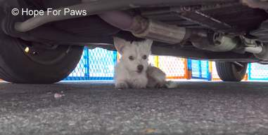 tiny dog stuck under car
