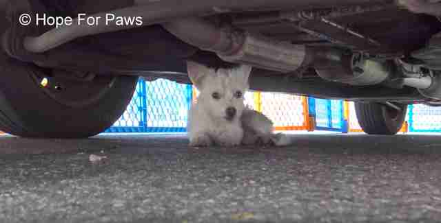 tiny dog stuck under car