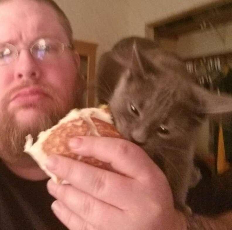 cat steals food minnesota
