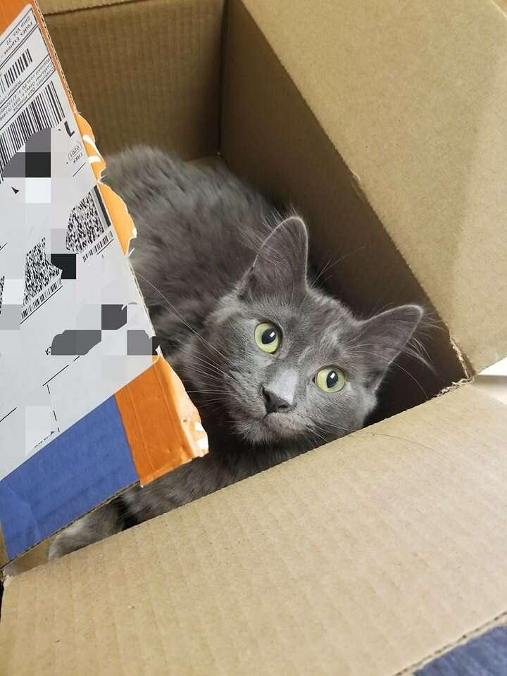kitten steals food minnesota