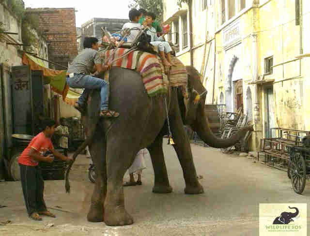 abused elephant rescue india