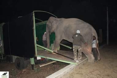 abused elephant rescue india
