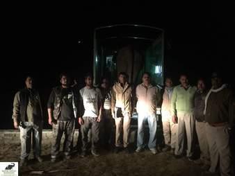 elephant rescue india