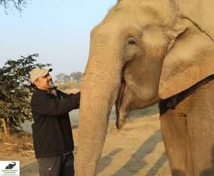 rescued elephant india