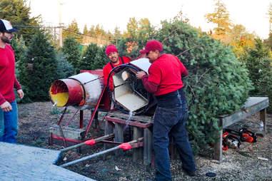 Grandma Buddy's Christmas Tree Farm