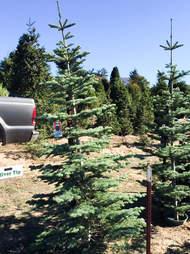 Garlock Tree Farm