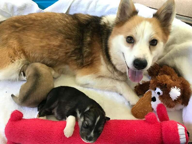 Mother dog with one of her puppies