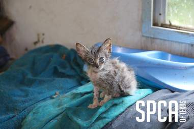 Kitten rescued from hoarder's property