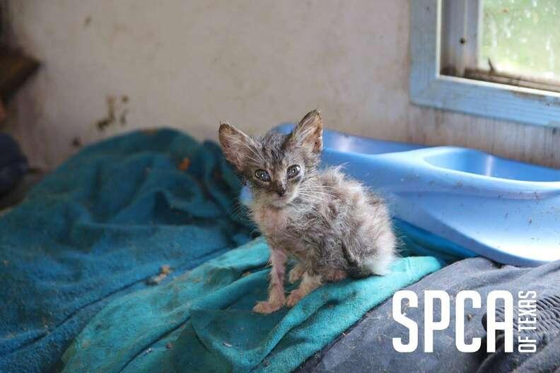 Kitten rescued from hoarder's property