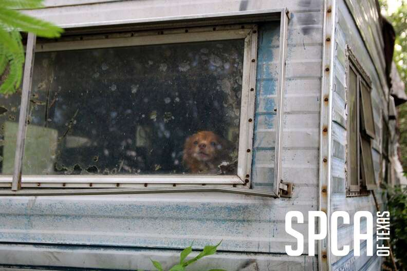 Neglected dog inside old house