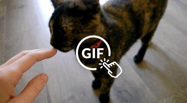 Adoptable tortoiseshell cat survived Hurricane Harvey