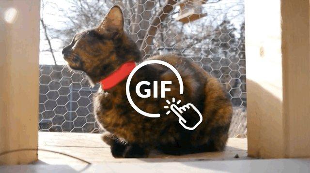 Adoptable cat saved from Hurricane Harvey