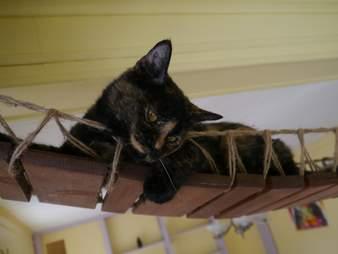 Cat saved from Hurricane Harvey needs home