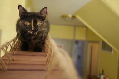 Adoptable tortoiseshell cat saved from Hurricane Harvey