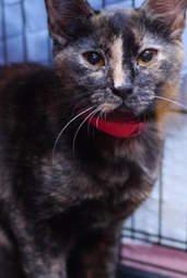 Adoptable cat saved from Hurricane Harvey needs home