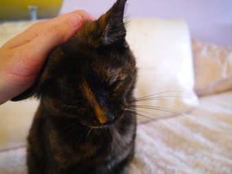 Adoptable cat saved during Hurricane Harvey
